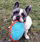 Picture of Miss Molly with her frisbee